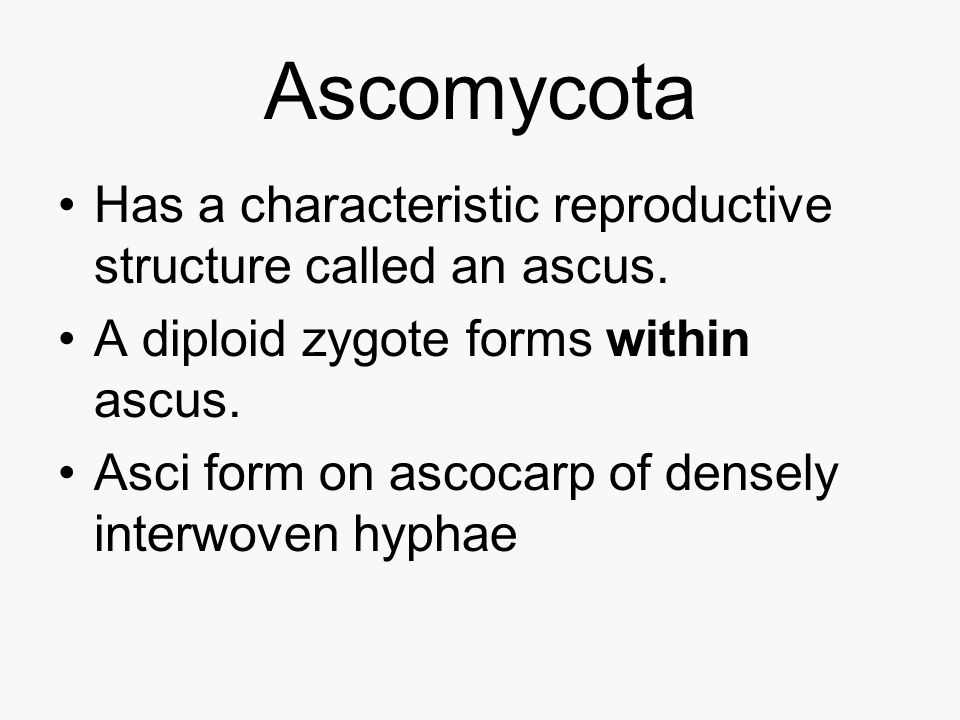 Ascomycota Has a characteristic reproductive structure called an ascus. A diploid zygote forms within ascus.