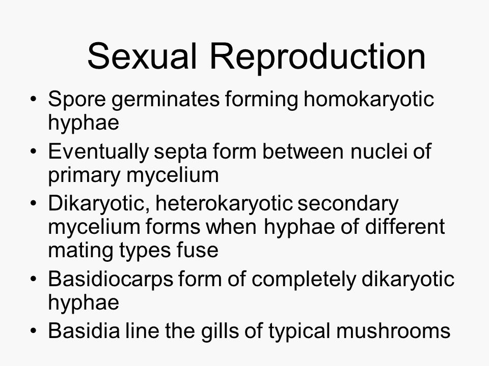 Sexual Reproduction Spore germinates forming homokaryotic hyphae