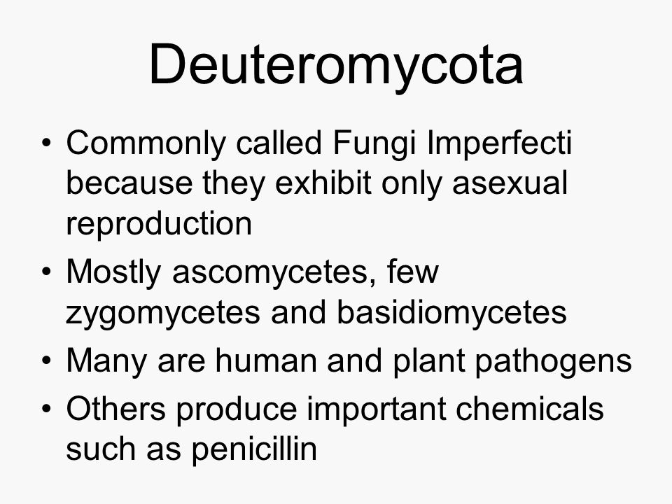 Deuteromycota Commonly called Fungi Imperfecti because they exhibit only asexual reproduction.