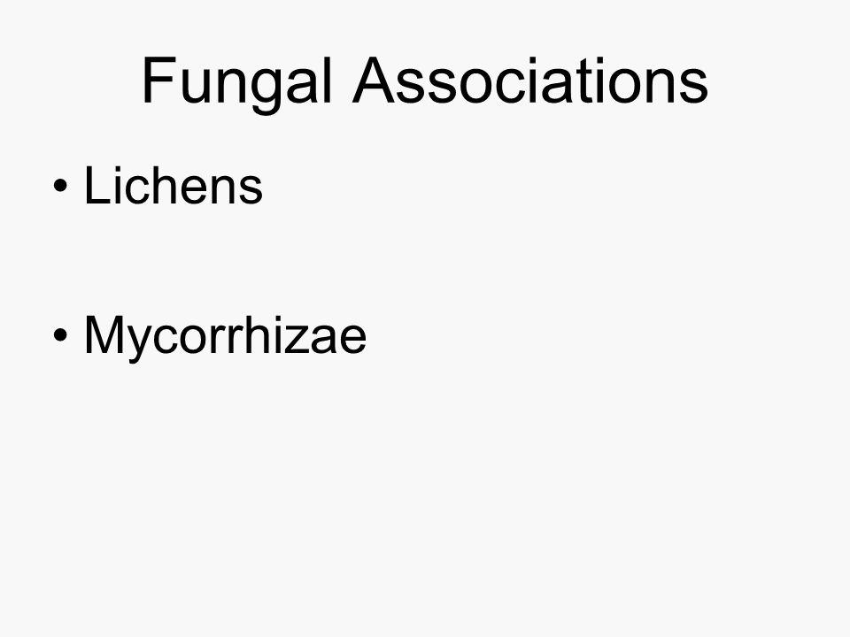 Fungal Associations Lichens Mycorrhizae
