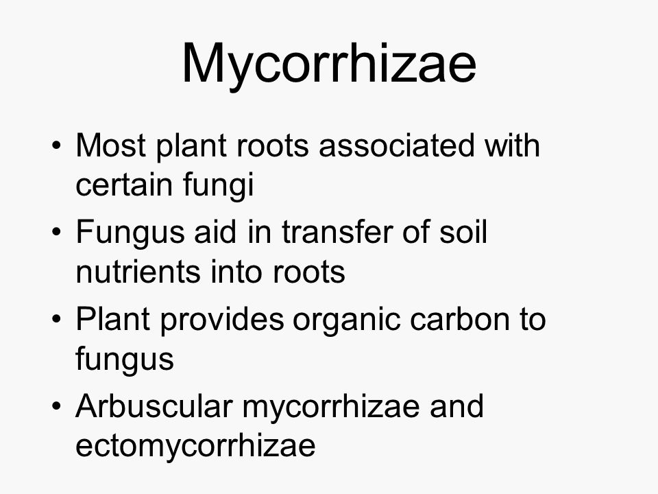 Mycorrhizae Most plant roots associated with certain fungi