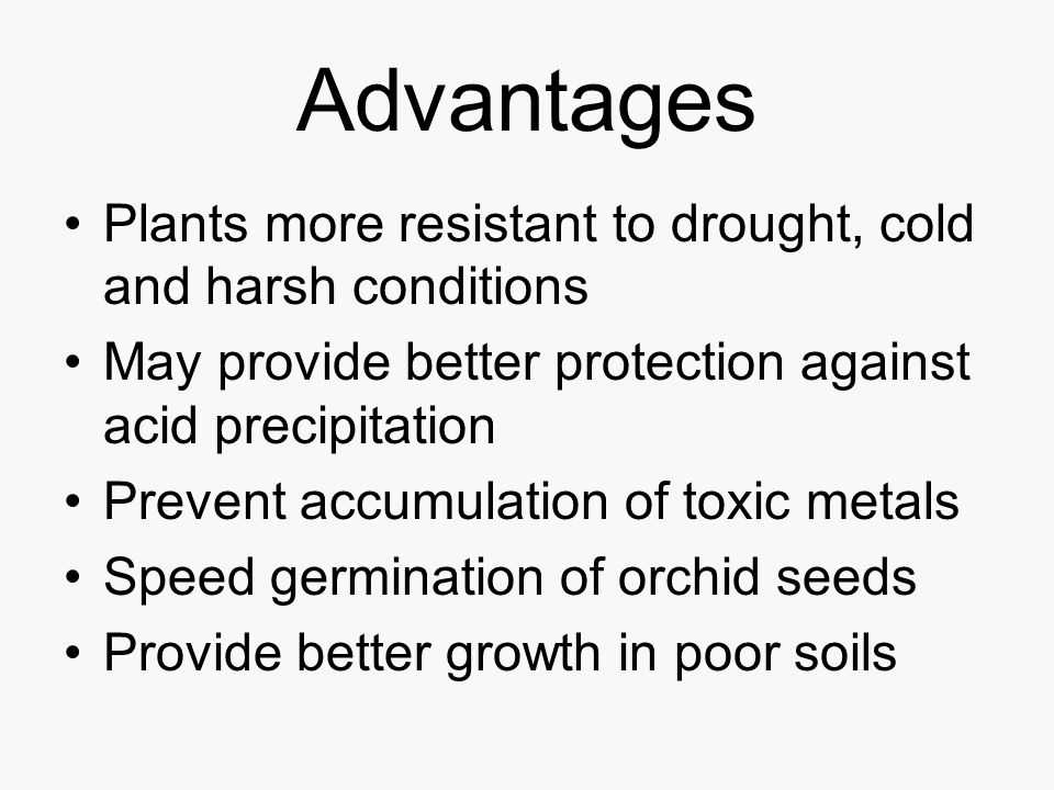 Advantages Plants more resistant to drought, cold and harsh conditions