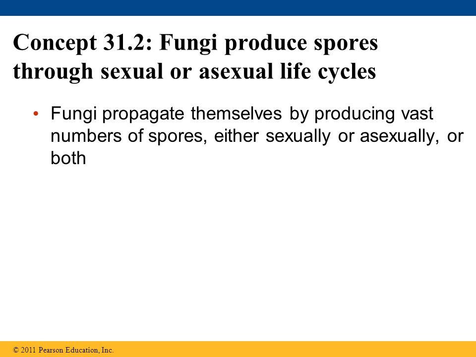 Concept 31.2: Fungi produce spores through sexual or asexual life cycles