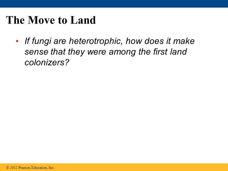 The Move to Land If fungi are heterotrophic, how does it make sense that they were among the first land colonizers