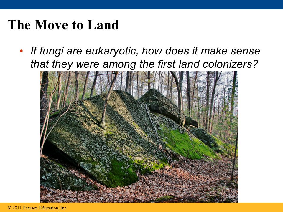 The Move to Land If fungi are eukaryotic, how does it make sense that they were among the first land colonizers