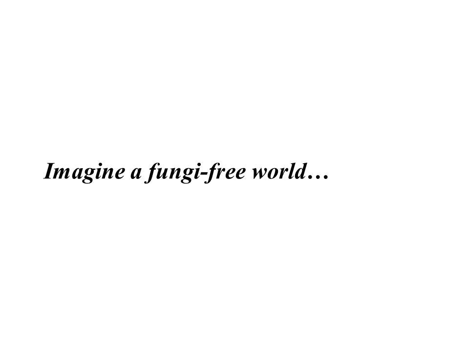 Imagine a fungi-free world…