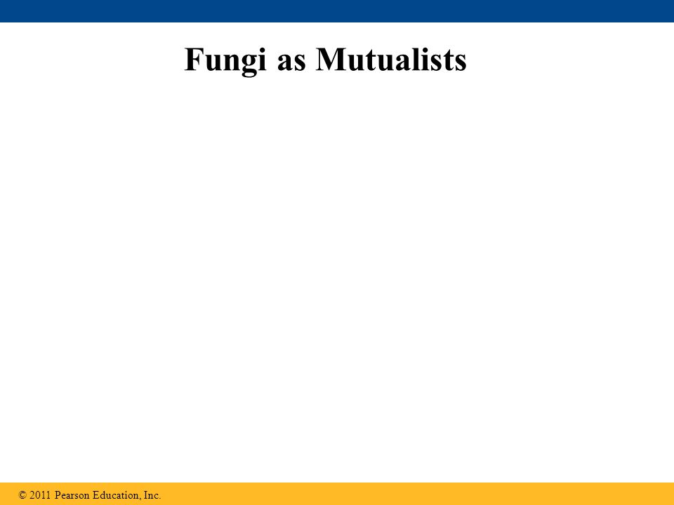 Fungi as Mutualists © 2011 Pearson Education, Inc.