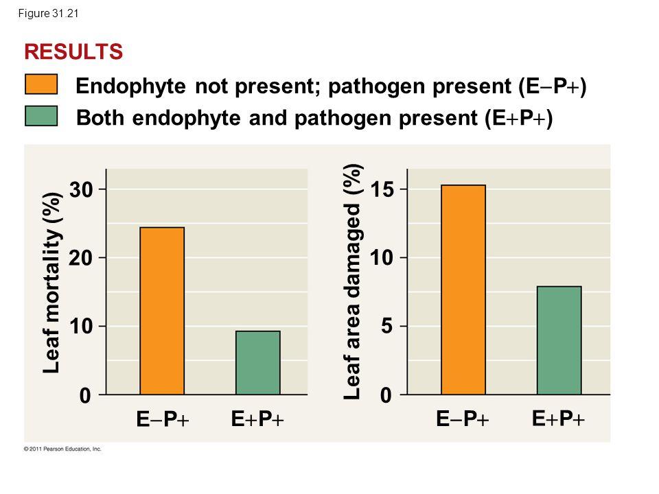 Endophyte not present; pathogen present (EP)