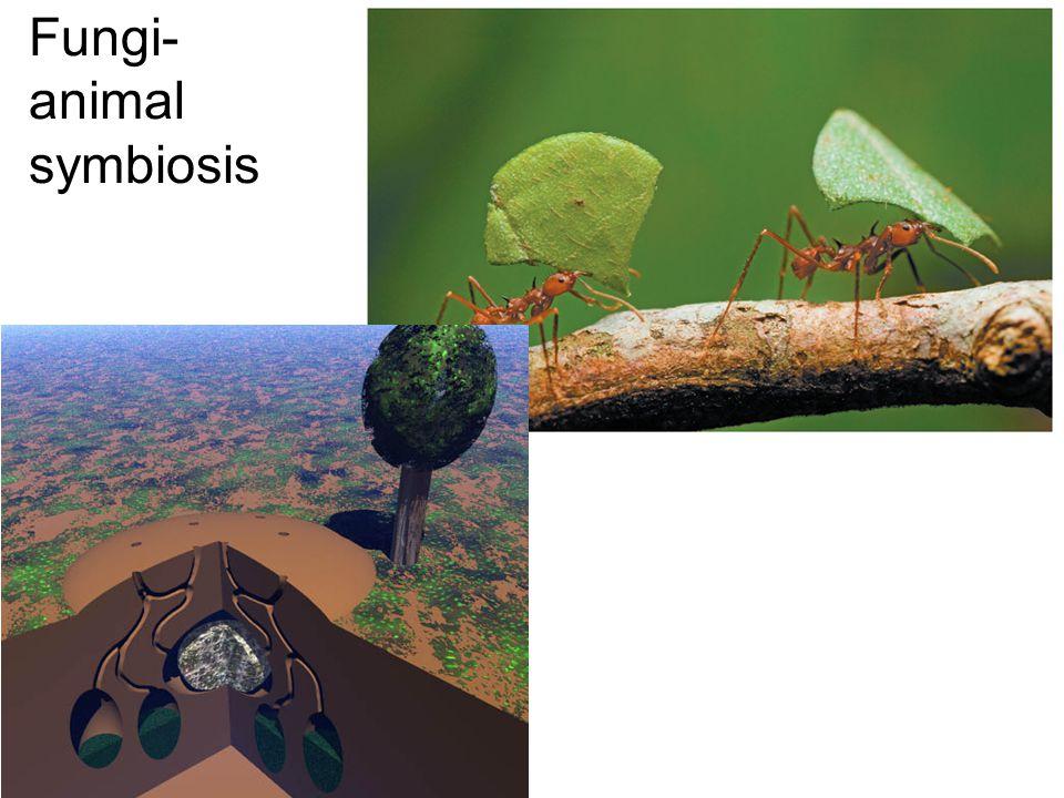 Fungi-animal symbiosis