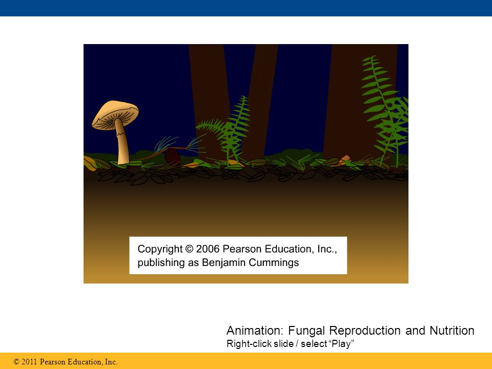 Animation: Fungal Reproduction and Nutrition Right-click slide / select Play