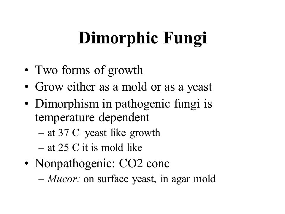 Dimorphic Fungi Two forms of growth