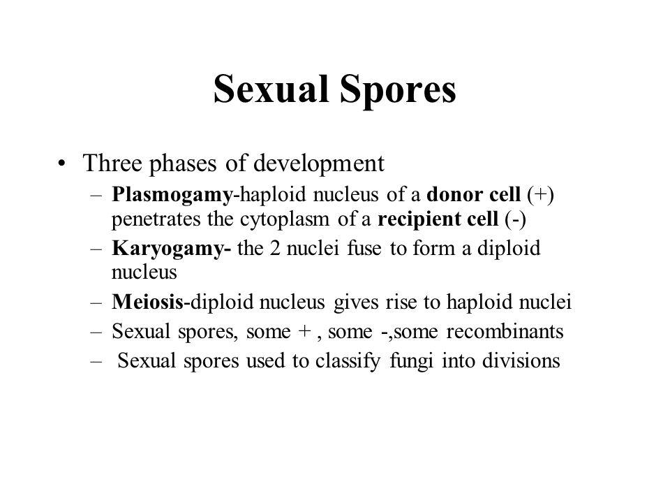 Sexual Spores Three phases of development
