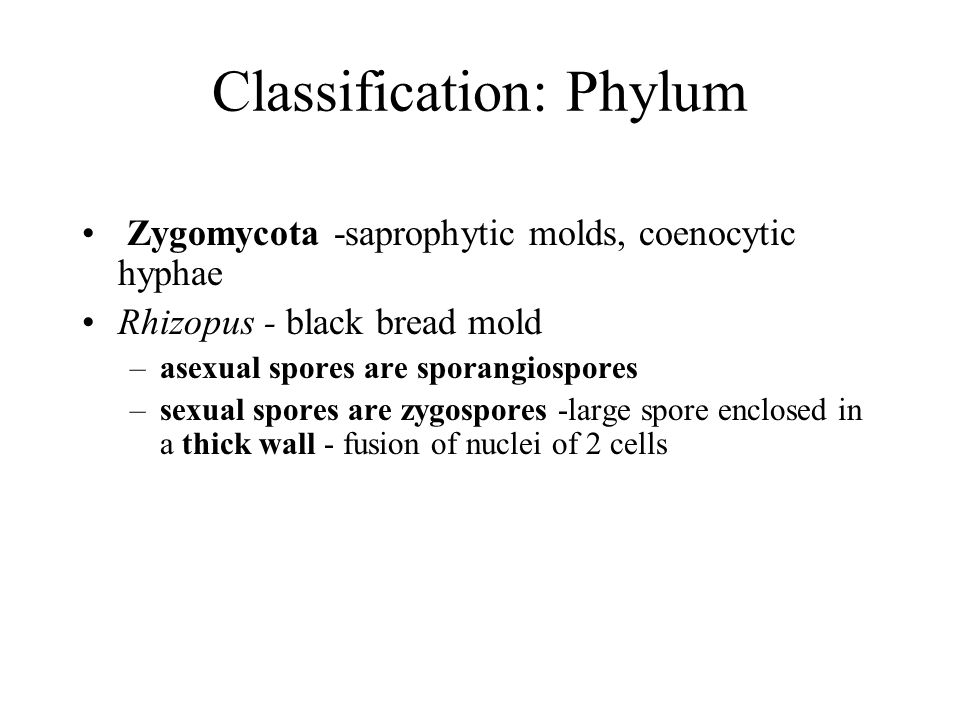 Classification: Phylum