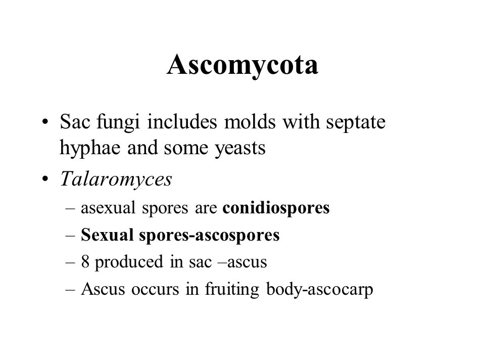 Ascomycota Sac fungi includes molds with septate hyphae and some yeasts. Talaromyces. asexual spores are conidiospores.