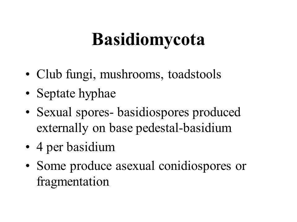 Basidiomycota Club fungi, mushrooms, toadstools Septate hyphae
