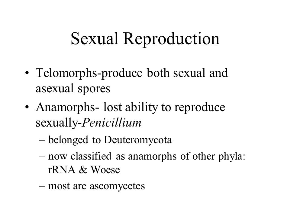 Sexual Reproduction Telomorphs-produce both sexual and asexual spores