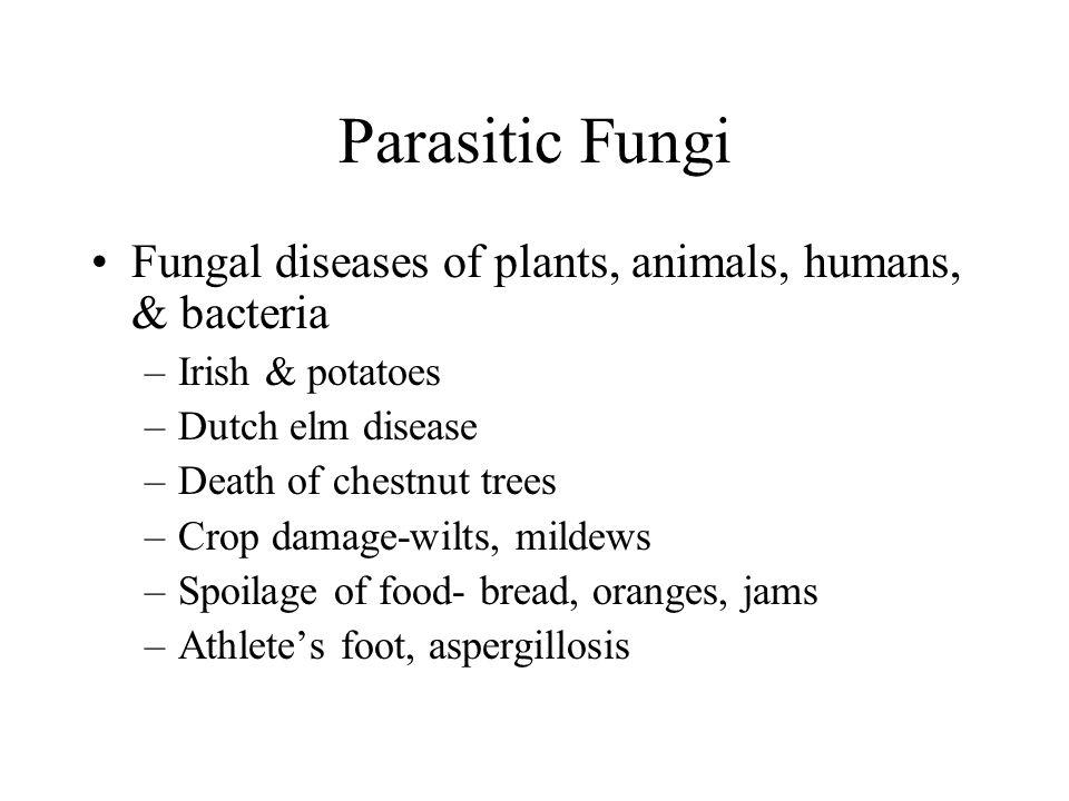 Parasitic Fungi Fungal diseases of plants, animals, humans, & bacteria