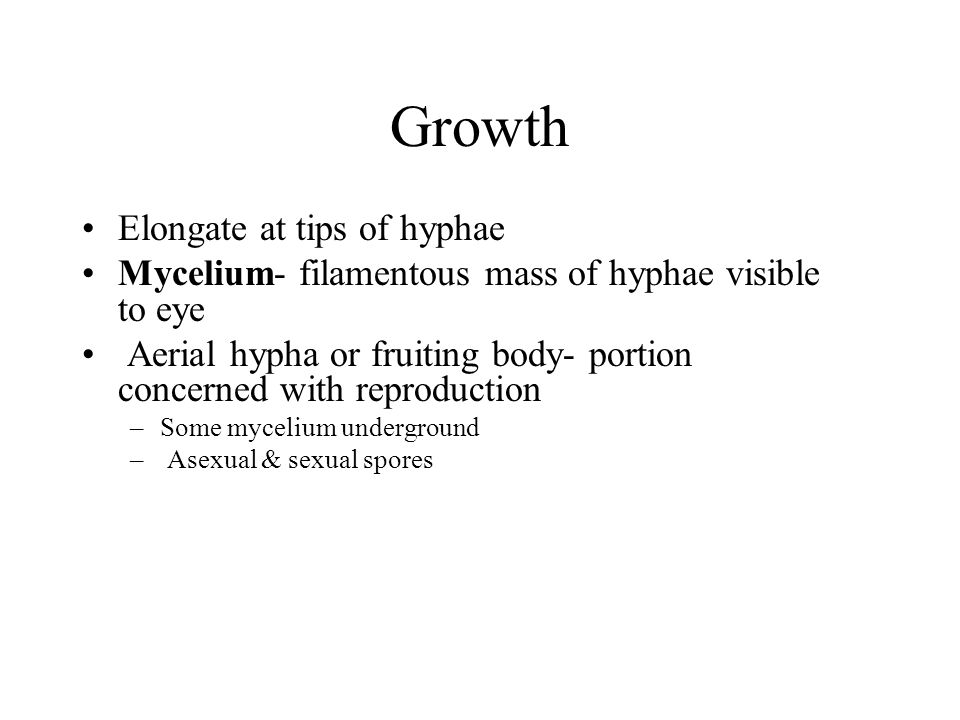Growth Elongate at tips of hyphae