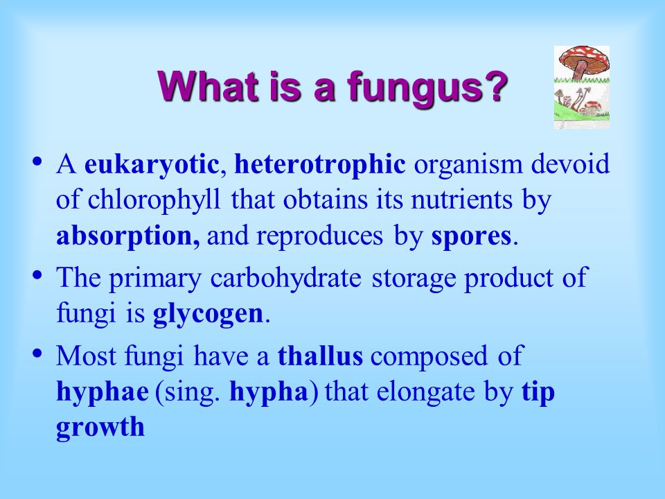 What is a fungus A eukaryotic, heterotrophic organism devoid of chlorophyll that obtains its nutrients by absorption, and reproduces by spores.
