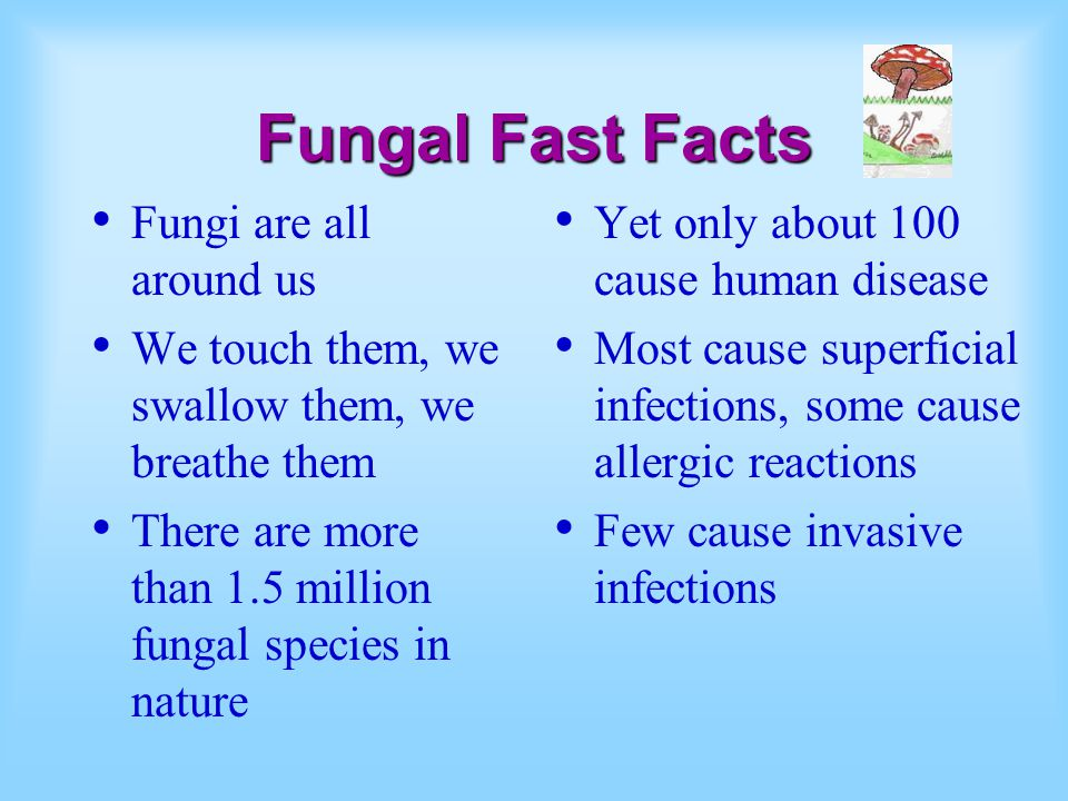 Fungal Fast Facts Fungi are all around us