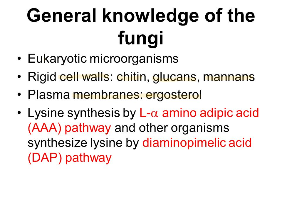 General knowledge of the fungi