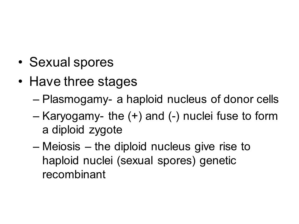 Sexual spores Have three stages