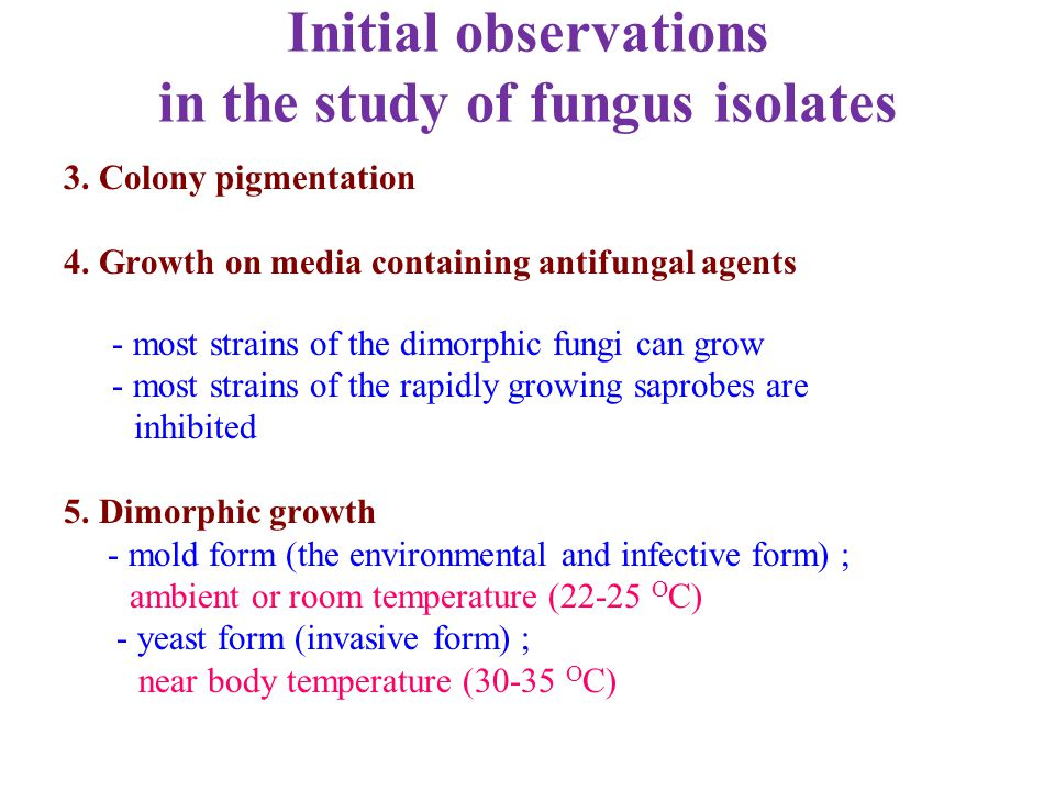 Initial observations in the study of fungus isolates