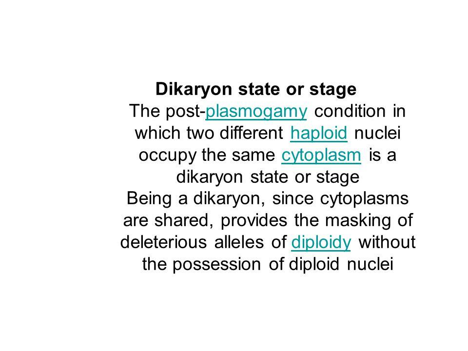 Dikaryon state or stage