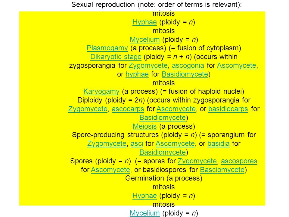 Sexual Reproduction Sexual reproduction (note: order of terms is relevant): mitosis. Hyphae (ploidy = n)