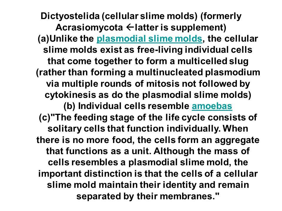 (b) Individual cells resemble amoebas