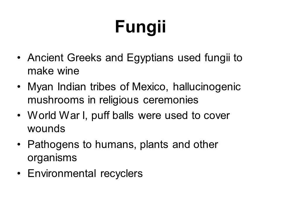 Fungii Ancient Greeks and Egyptians used fungii to make wine