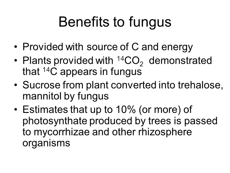 Benefits to fungus Provided with source of C and energy