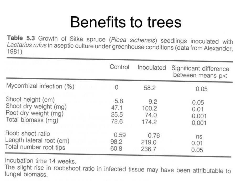 Benefits to trees