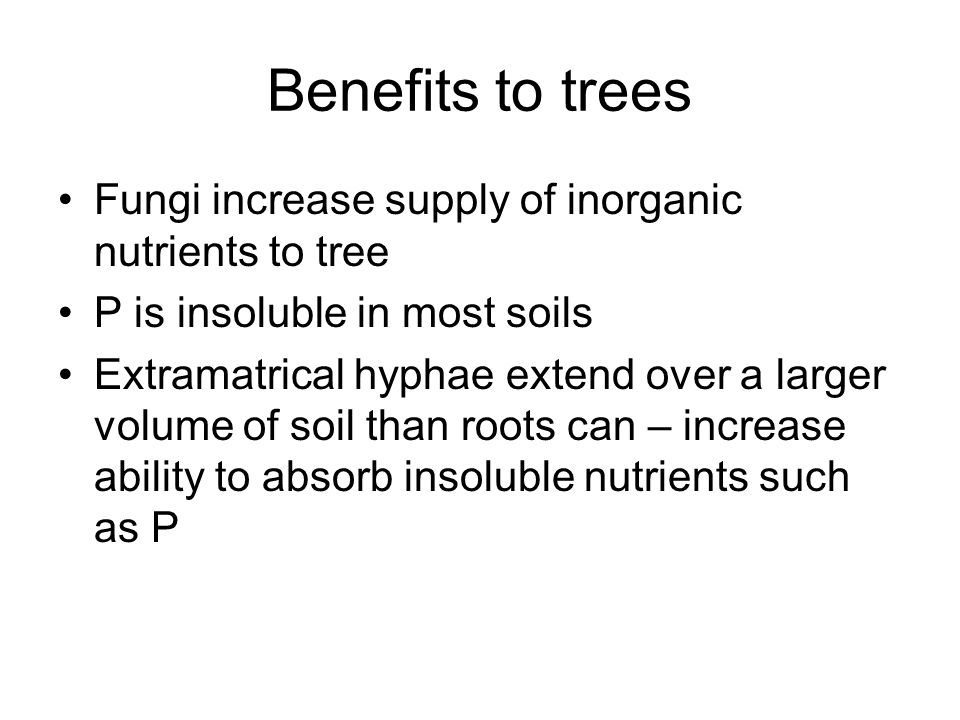 Benefits to trees Fungi increase supply of inorganic nutrients to tree