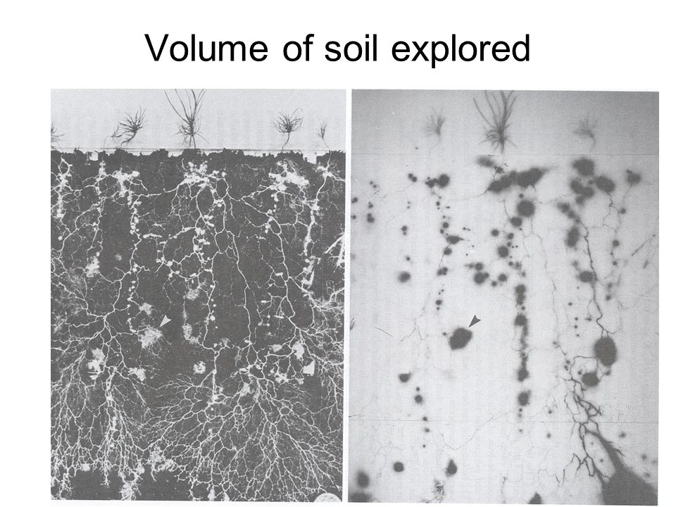 Volume of soil explored