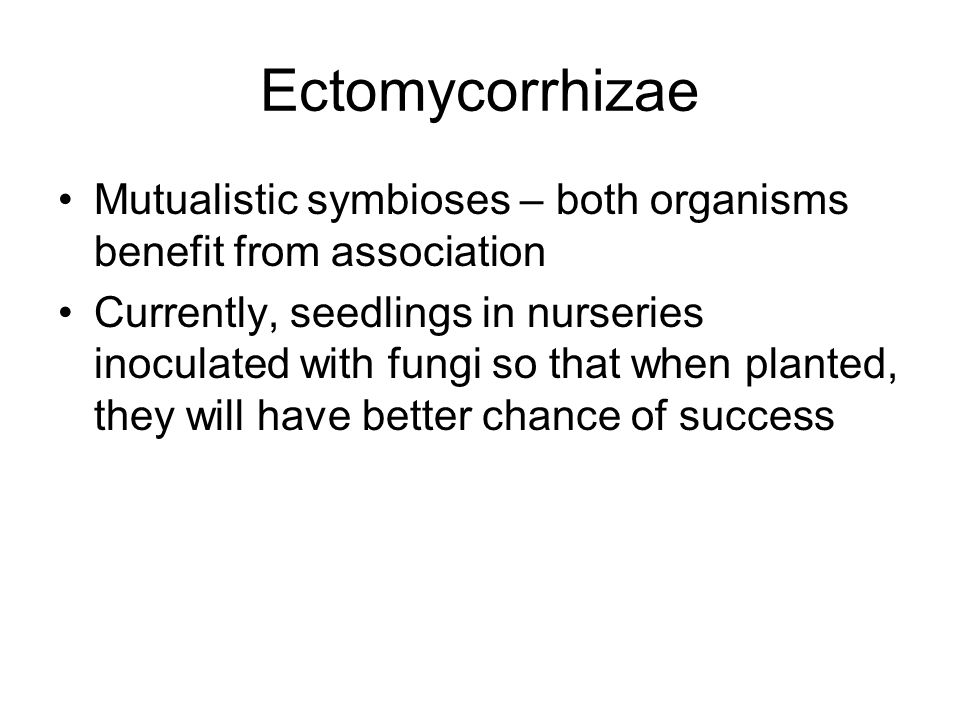 Ectomycorrhizae Mutualistic symbioses – both organisms benefit from association.