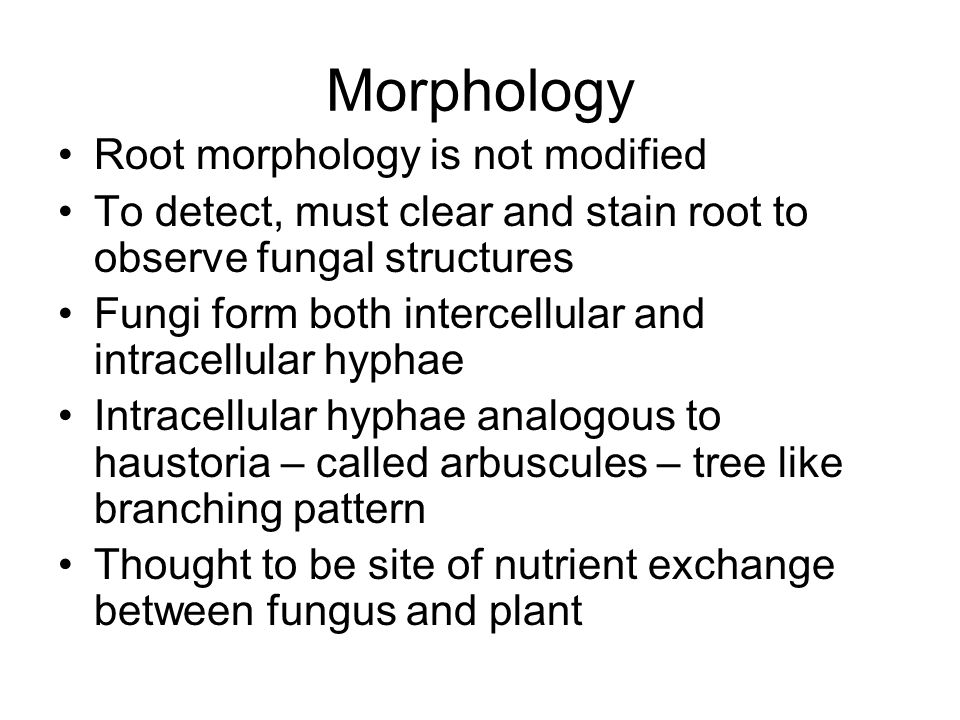 Morphology Root morphology is not modified