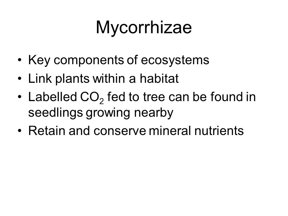 Mycorrhizae Key components of ecosystems Link plants within a habitat