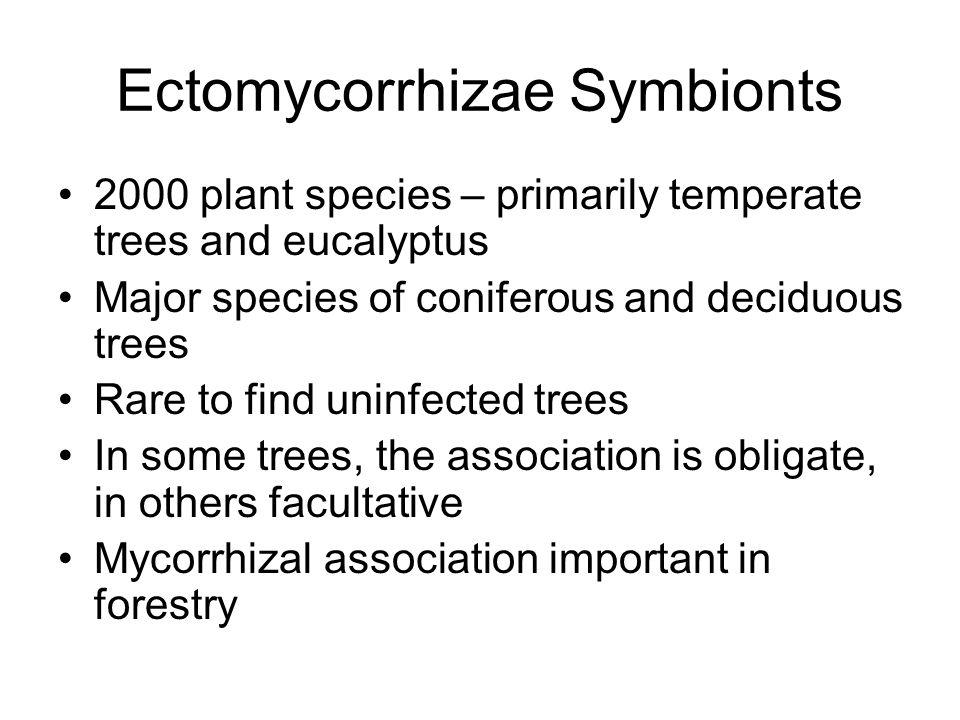 Ectomycorrhizae Symbionts