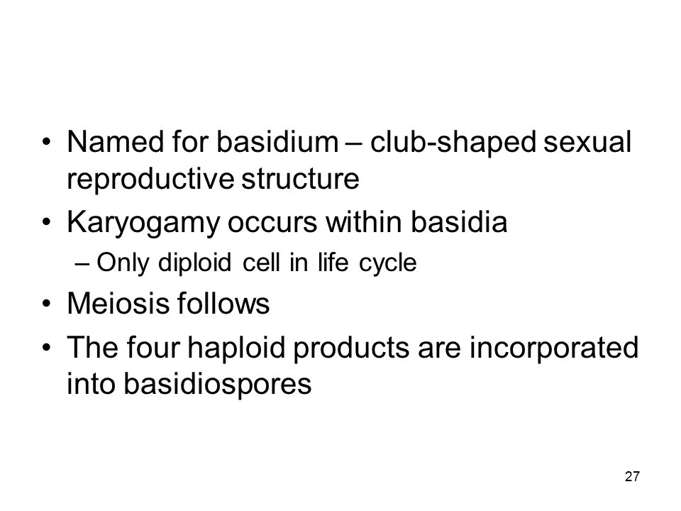 Named for basidium – club-shaped sexual reproductive structure