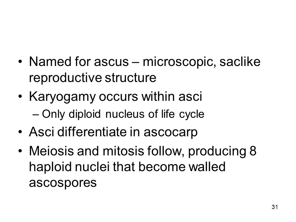 Named for ascus – microscopic, saclike reproductive structure