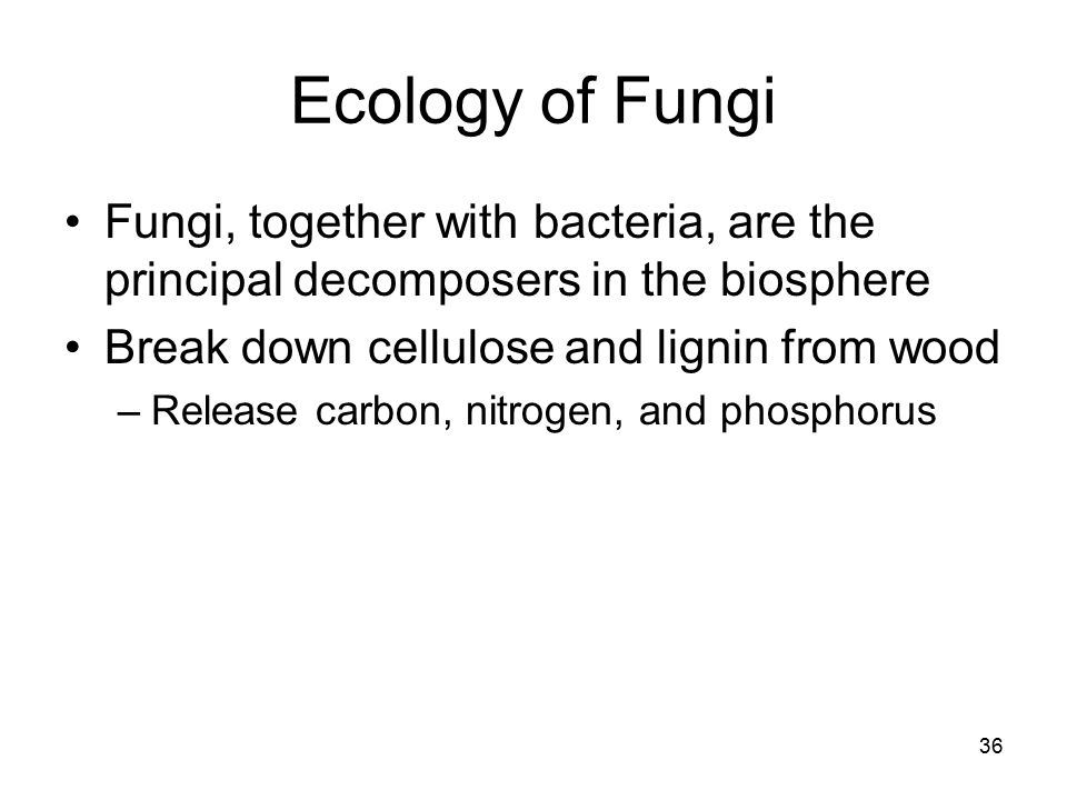 Ecology of Fungi Fungi, together with bacteria, are the principal decomposers in the biosphere. Break down cellulose and lignin from wood.