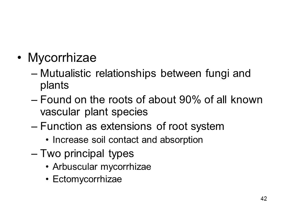 Mycorrhizae Mutualistic relationships between fungi and plants