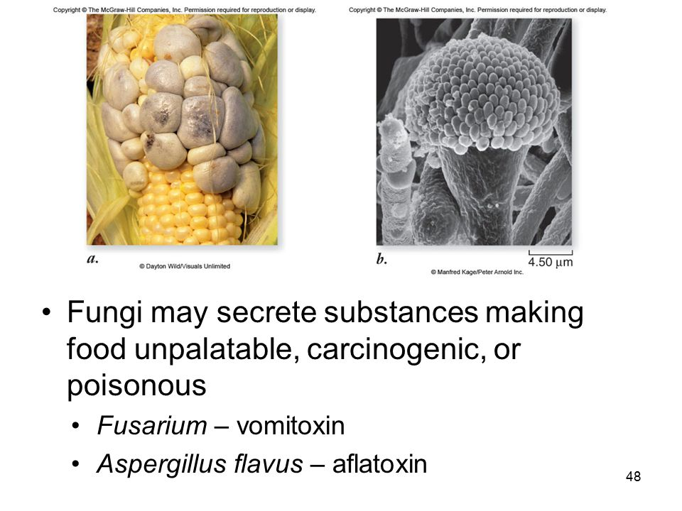 Fungi may secrete substances making food unpalatable, carcinogenic, or poisonous