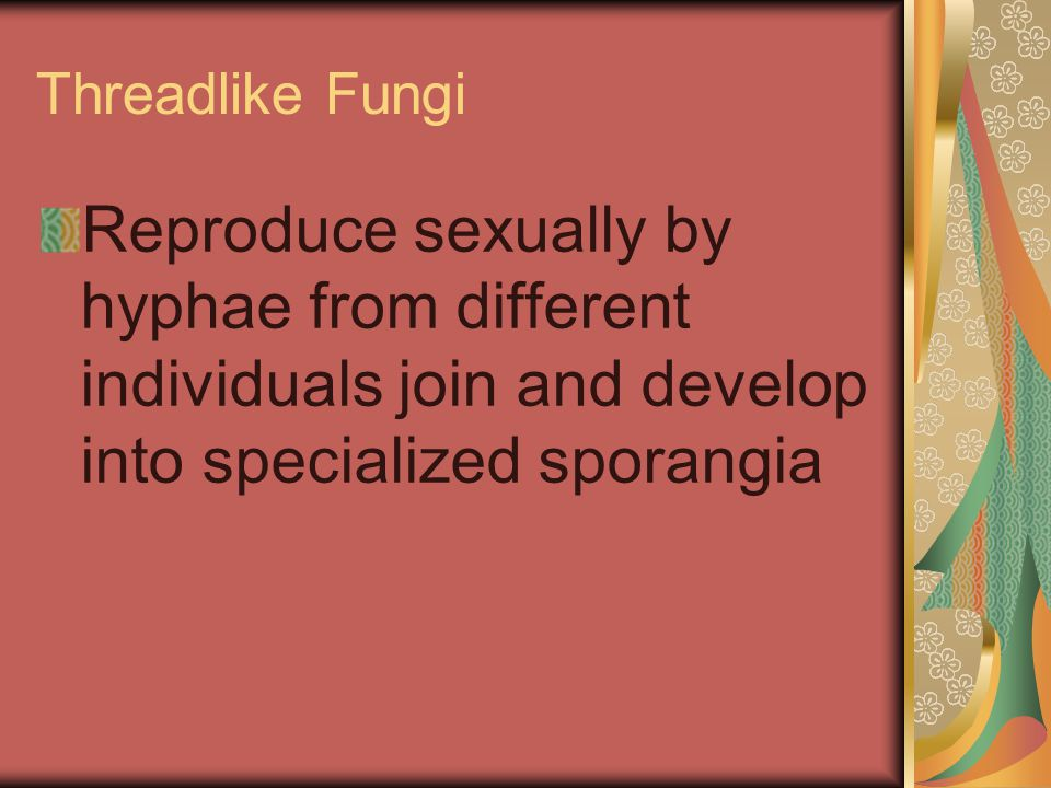 Threadlike Fungi Reproduce sexually by hyphae from different individuals join and develop into specialized sporangia.