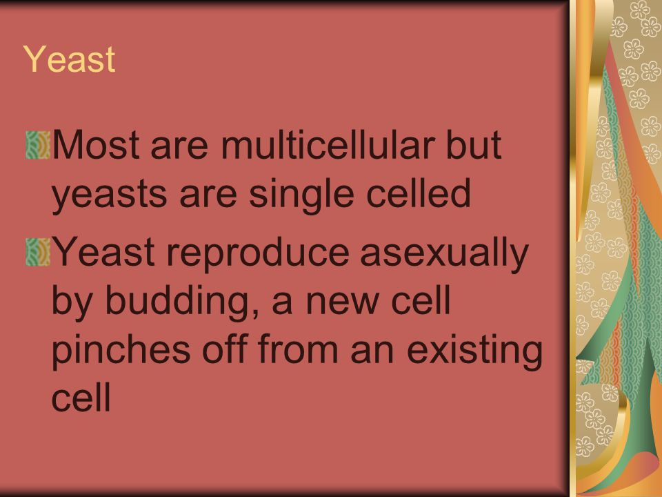 Most are multicellular but yeasts are single celled