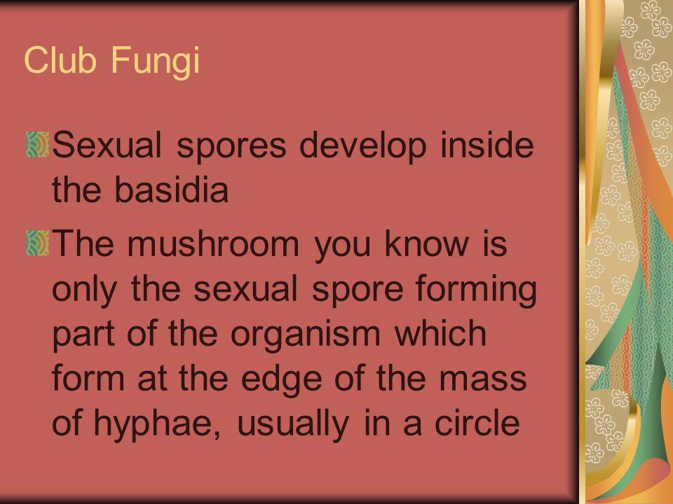 Club Fungi Sexual spores develop inside the basidia.
