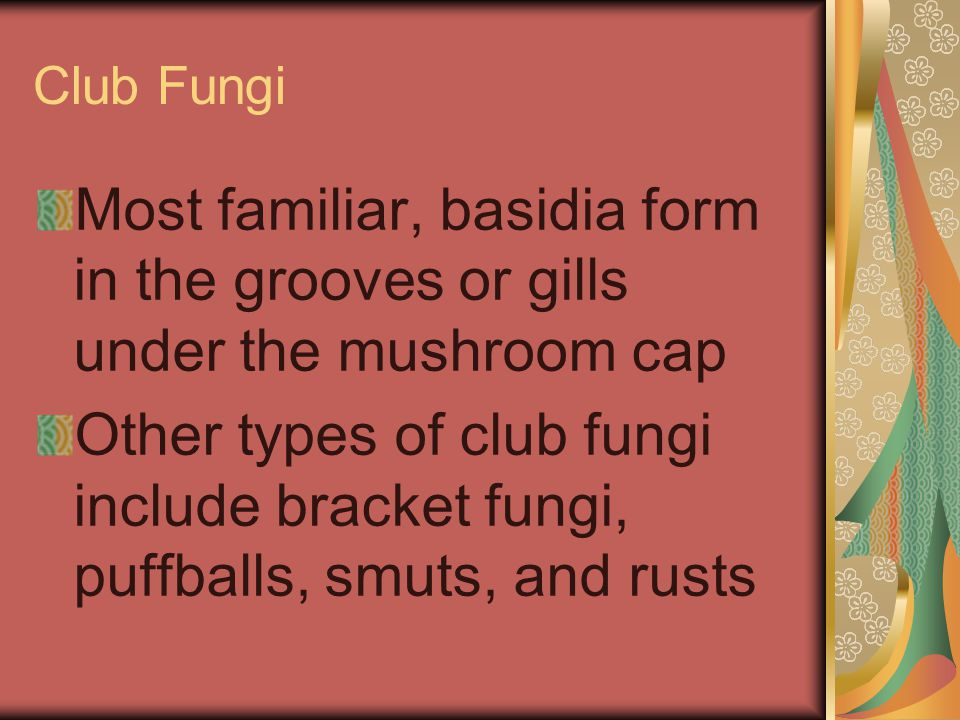 Club Fungi Most familiar, basidia form in the grooves or gills under the mushroom cap.