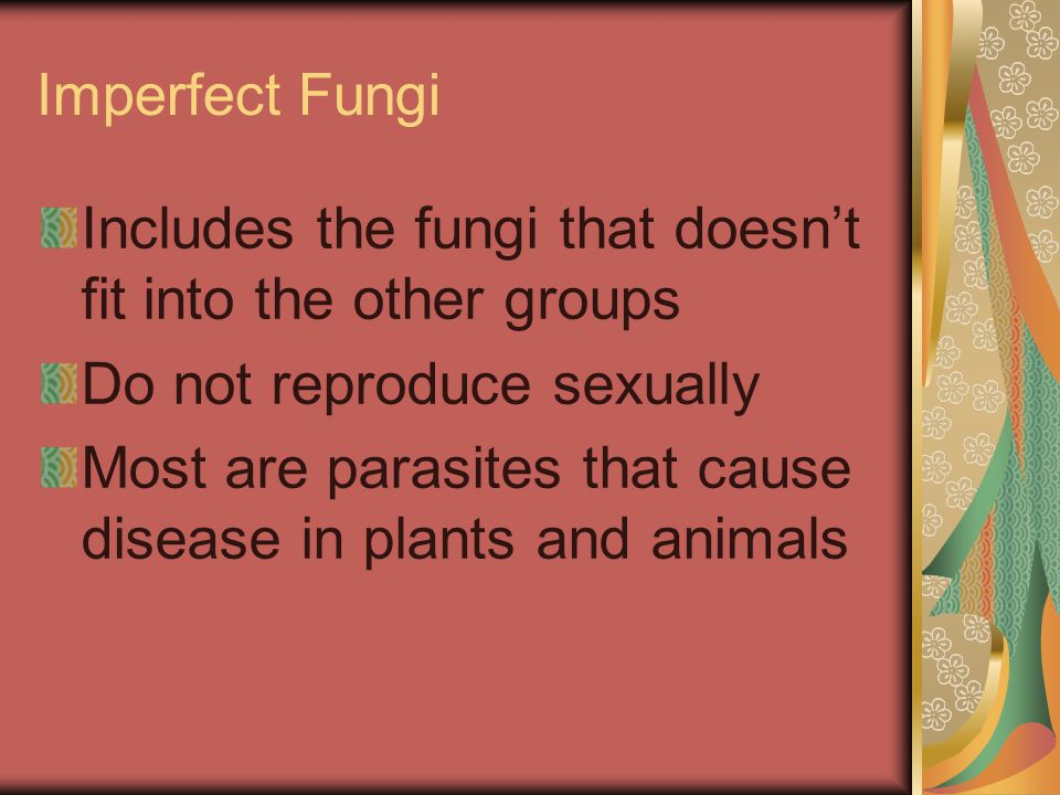 Imperfect Fungi Includes the fungi that doesn't fit into the other groups. Do not reproduce sexually.