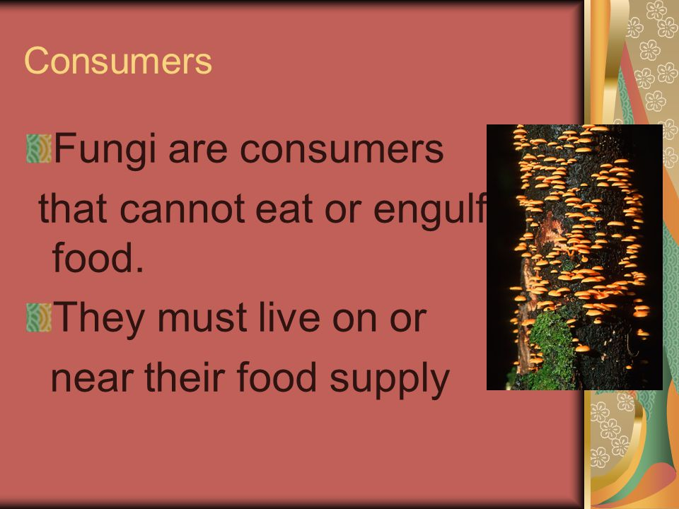 that cannot eat or engulf food. They must live on or